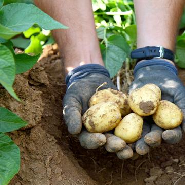 Best Economy Forum Bioland Kartoffeln