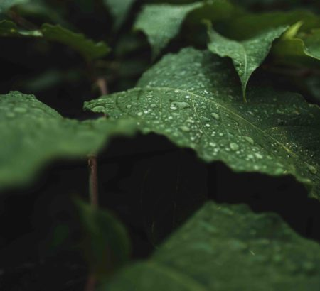 Closeup of beautiful wild green leaves with dew on them